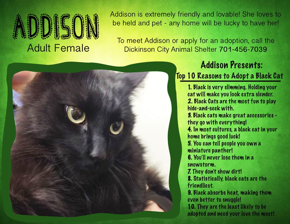 cat Addison adoption poster